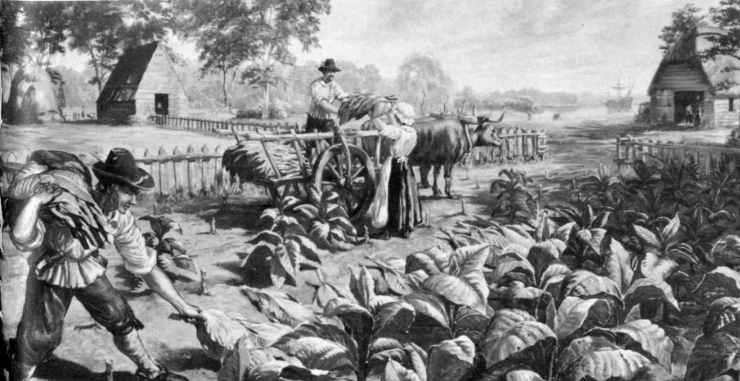 tobacco fields.jpg